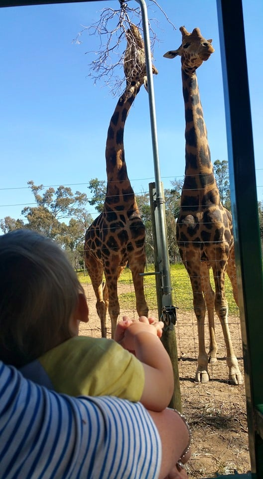 'Today was a great day at Altina Wildlife Park. Our tour guy Stuart was amazing it was good to be able to have a laugh and be serious at the same time with him.'