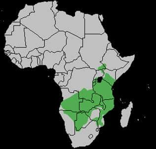 Eland Antelope Population Distribution Map